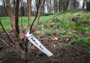 Hazelaar aangeplant in voedselbos De Groote Wijngaard_2MP